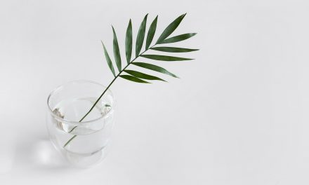 Stylish Plants For Your Home