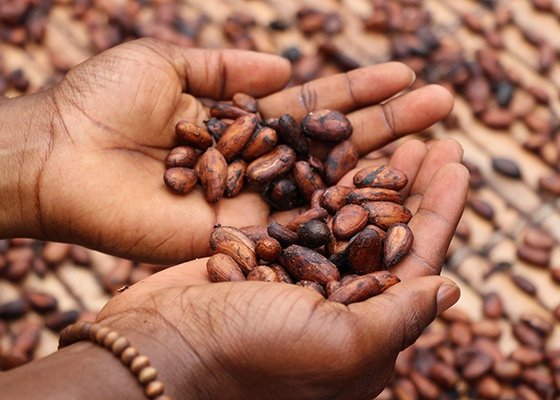 healthy coffee alternatives cacao powder
