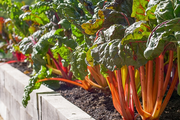 Grow Your own Guide To Buying Organic Food On a Budget