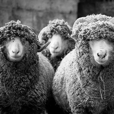 Wool Week October Newsletter