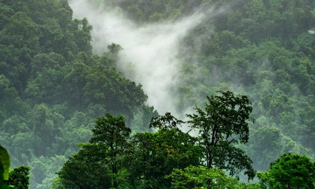 Misconceptions About Carbon Offsetting