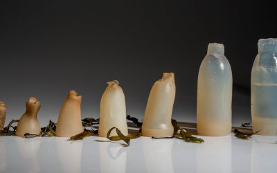 The Truth About Biodegradable and Compostable Beauty Products