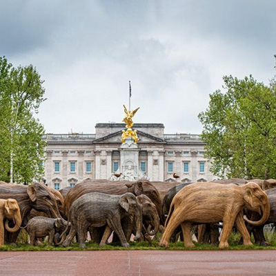 July 2021 Newsletter Co-existance Elephant Family London