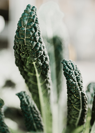7 surprising ways to optimise your health, according to a Nutrition Scientist Cavolo Nero